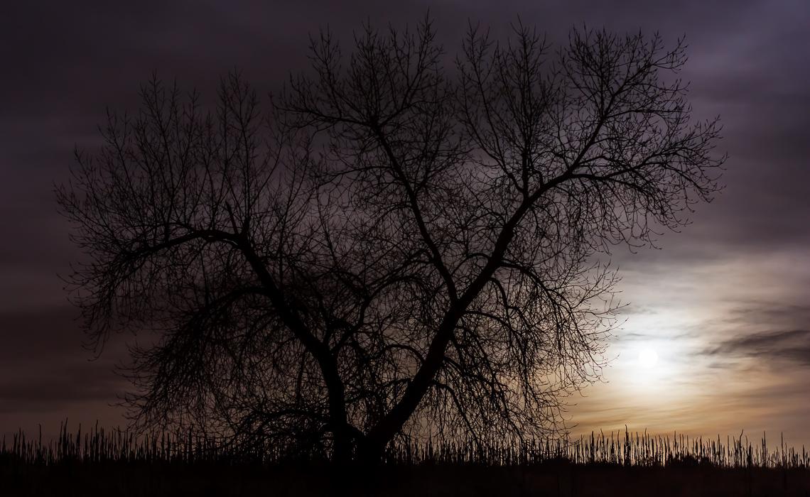 Silhouette in Moonlight