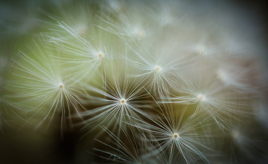 A canopy of tiny, translucent fronds cover a bundle of new life.