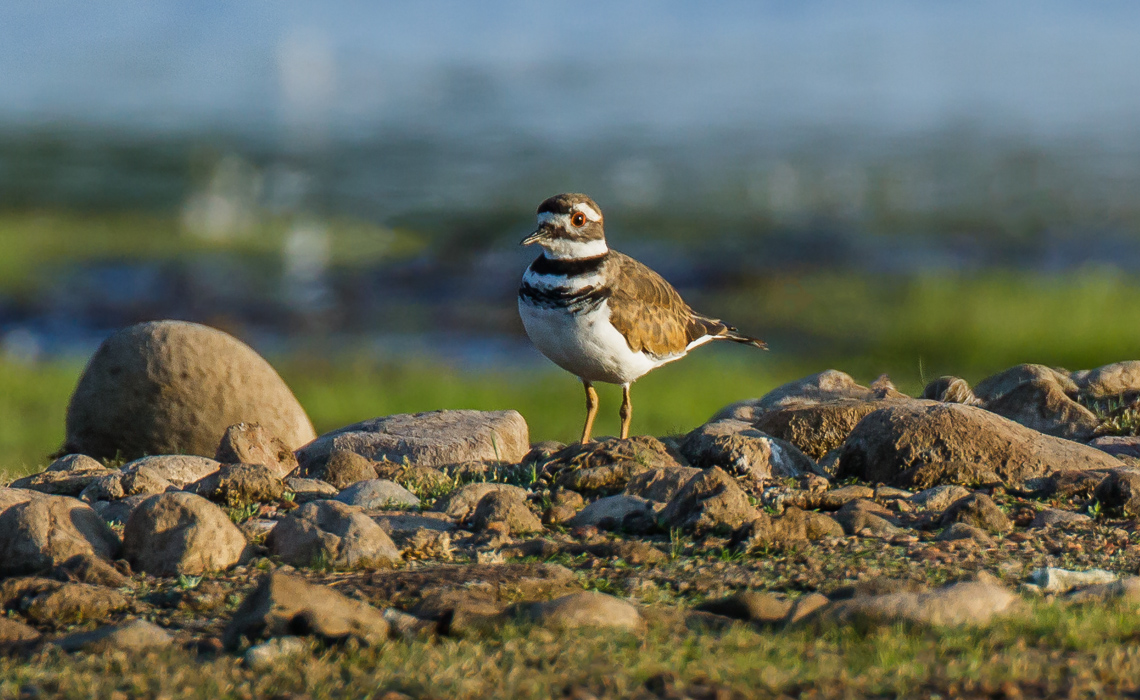Killdeer Rocks