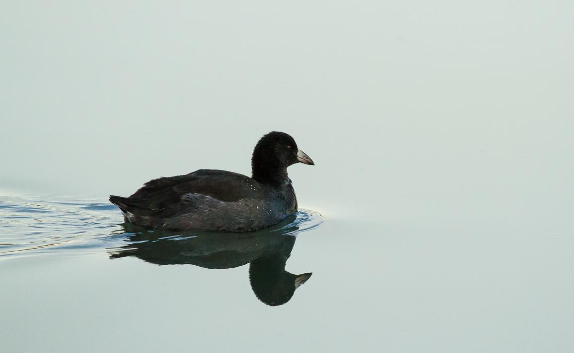 Cottonwood Creek Fall Waterbirds (1 of 8)