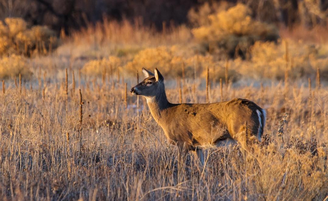 Winter Fauna at Cherry Creek (1 of 4)