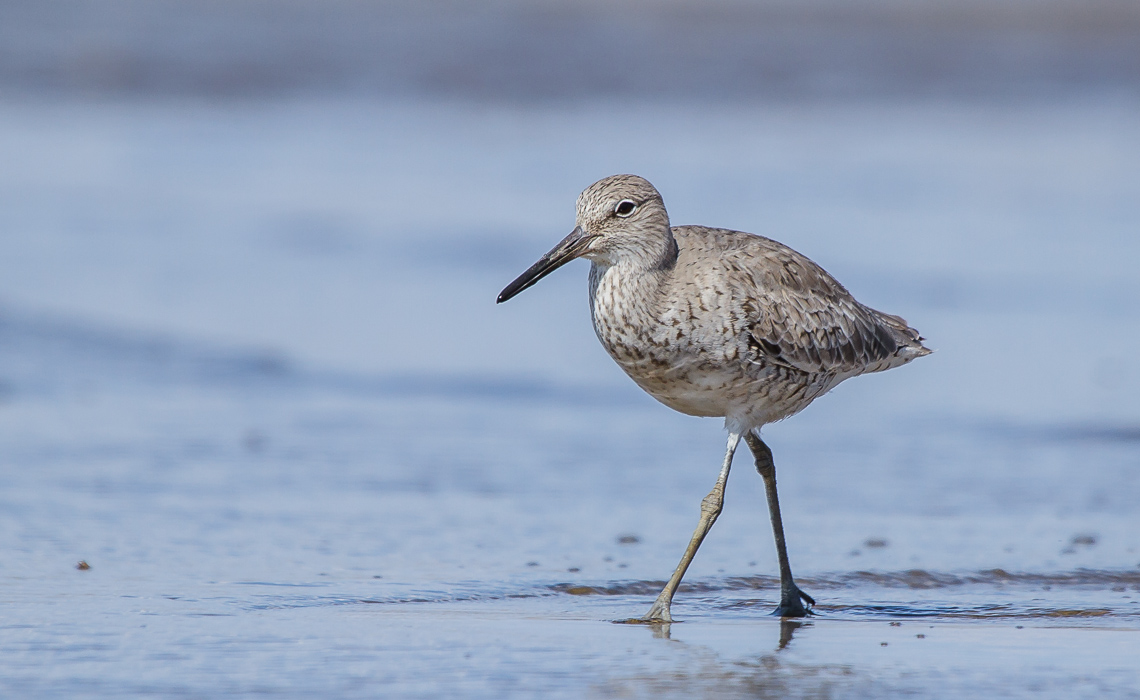 Will it be Willets (2 of 8)