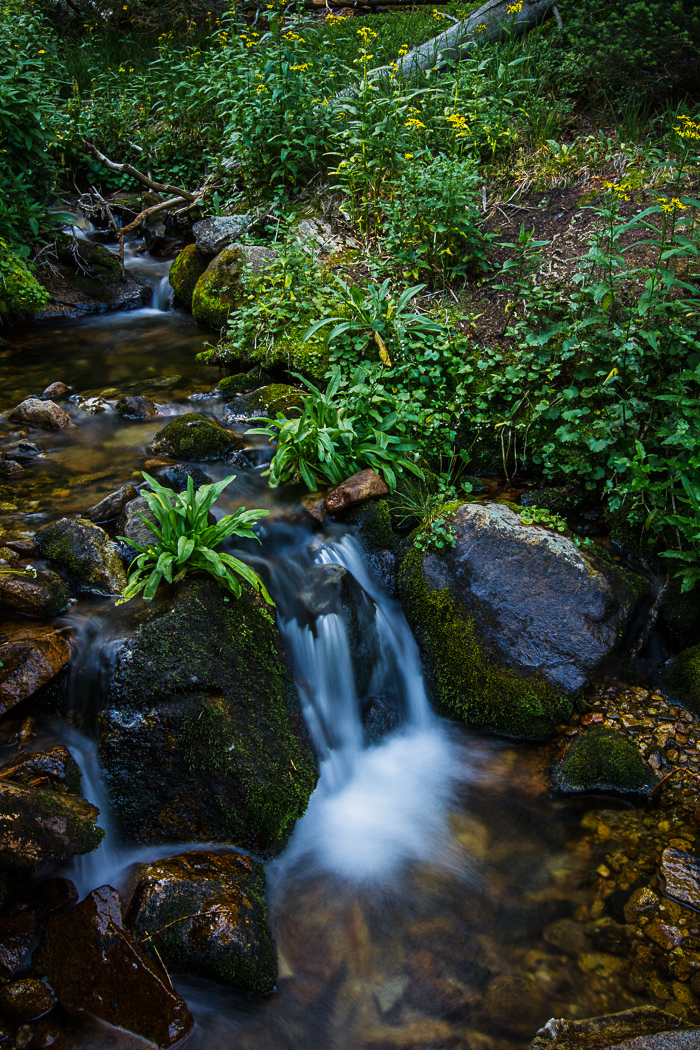 Cascading Creek Series (5 of 6)