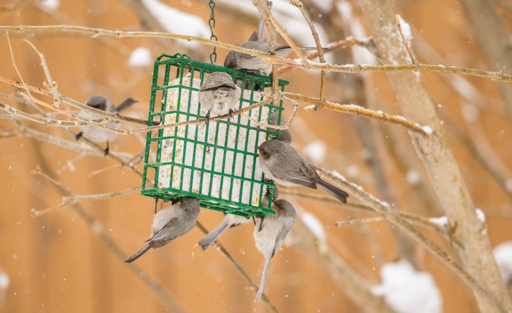 Descent Upon the Suet!