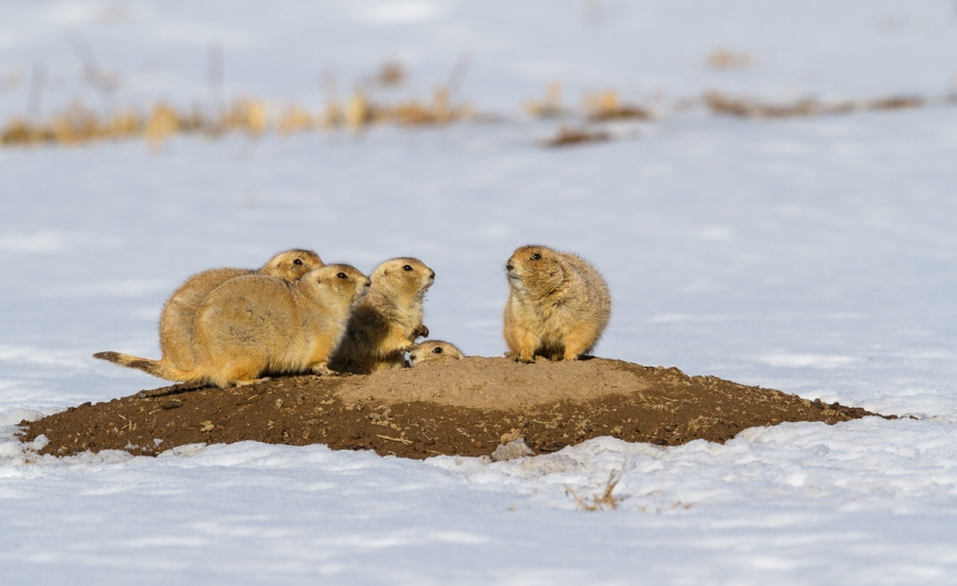 The Prairie Dogs of Dog Town-16