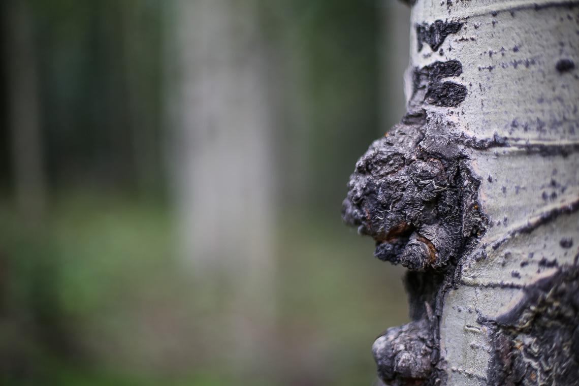 50mm Forest Landscape Boke-2