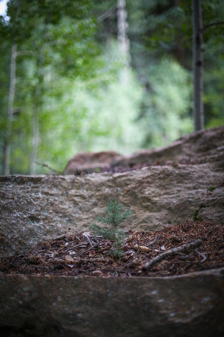 50mm Forest Landscape Boke-4