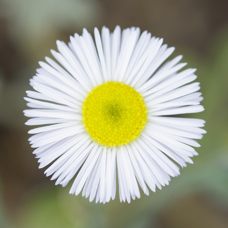 Deep Floral Macros-6