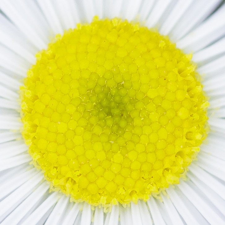 Deep Floral Macros-7