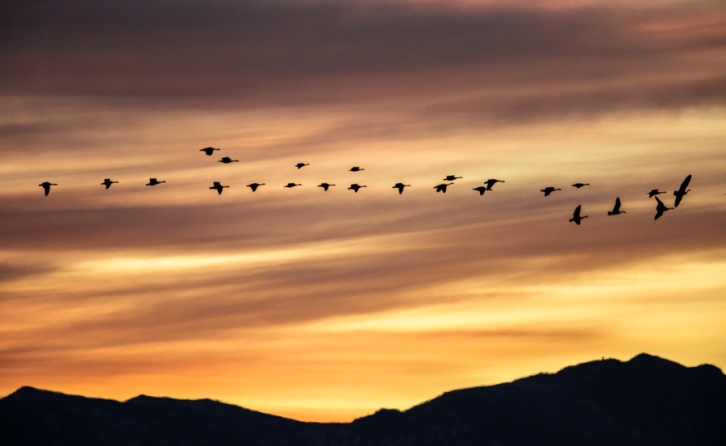 Flight of the Sunset Geese