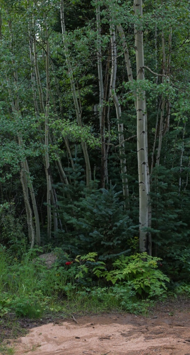 Hall Valley and the North Fork South Platte - Aspen Stand