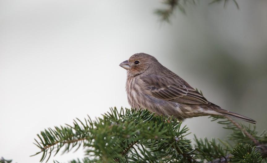 More Midwinter Birds-1